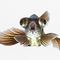 jellyfish78 Avatar
