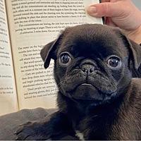 thewellreadpug Avatar