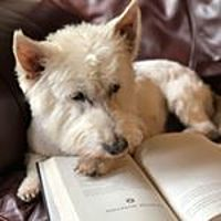 barkingaboutbooks Avatar