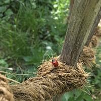 ladybug_liest Avatar