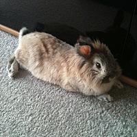 rabbitmaus Avatar