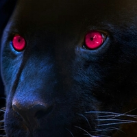 pinkpanthera Avatar