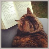 book cat Avatar