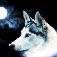 wolf-eyes Avatar