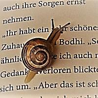 leseschneckchen555 Avatar