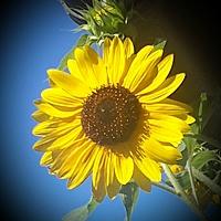 sunshine_81 Avatar